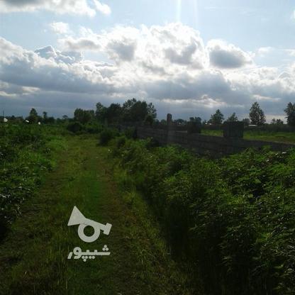 فروش زمین کشاورزی 1300 متر در چاف و چمخاله در گروه خرید و فروش املاک در گیلان در شیپور-عکس1