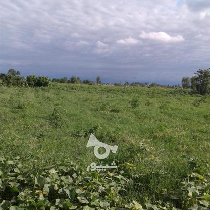 فروش زمین کشاورزی 1300 متر در چاف و چمخاله در گروه خرید و فروش املاک در گیلان در شیپور-عکس3