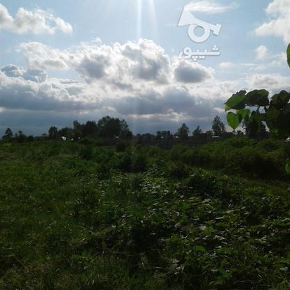فروش زمین کشاورزی 1300 متر در چاف و چمخاله در گروه خرید و فروش املاک در گیلان در شیپور-عکس4
