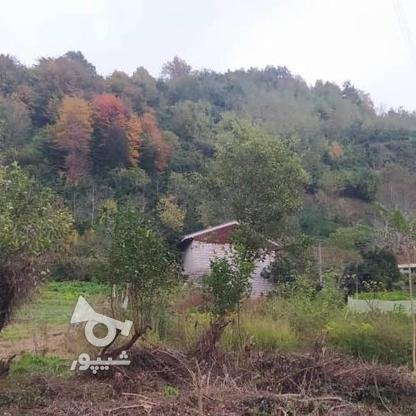 327 متر زمین مسکونی در کوهبنه در گروه خرید و فروش املاک در گیلان در شیپور-عکس5