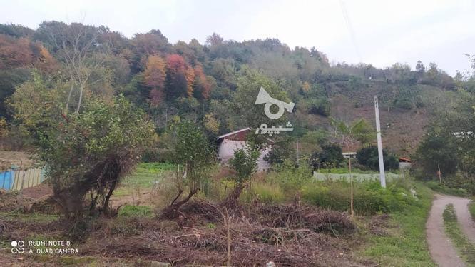 327 متر زمین مسکونی در کوهبنه در گروه خرید و فروش املاک در گیلان در شیپور-عکس10