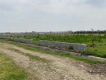 فروش زمین کشاورزی150 متر در قائم شهر در شیپور