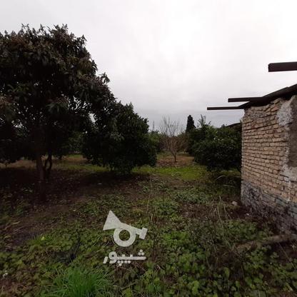 فروش زمین باغ مرکبات خانه باغی شهر اسلام اباد در گروه خرید و فروش املاک در مازندران در شیپور-عکس4