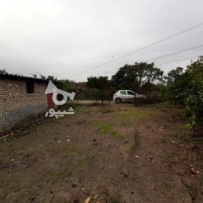 فروش زمین باغ مرکبات خانه باغی شهر اسلام اباد در گروه خرید و فروش املاک در مازندران در شیپور-عکس2