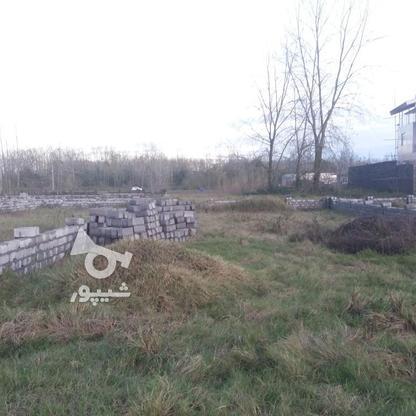 فروش زمین مسکونی 300 متر در لنگرود در گروه خرید و فروش املاک در گیلان در شیپور-عکس2