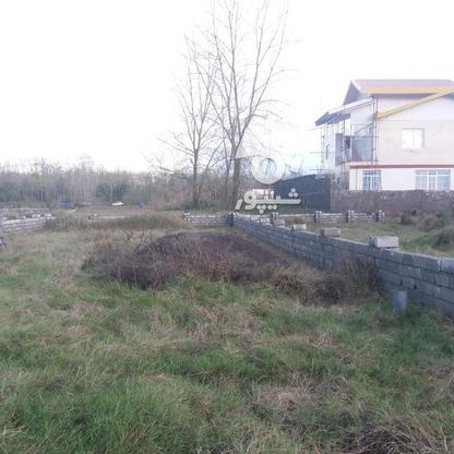 فروش زمین مسکونی 300 متر در لنگرود در گروه خرید و فروش املاک در گیلان در شیپور-عکس1