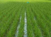 فروش زمین کشاورزی 400 متر ی در کوی اصحاب شهاب لیلم در شیپور-عکس کوچک