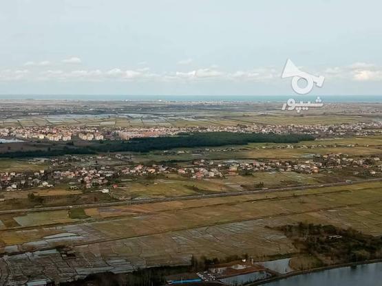 زمین مسکونی،باغی 3500 متری در آبچالکی در گروه خرید و فروش املاک در گیلان در شیپور-عکس5
