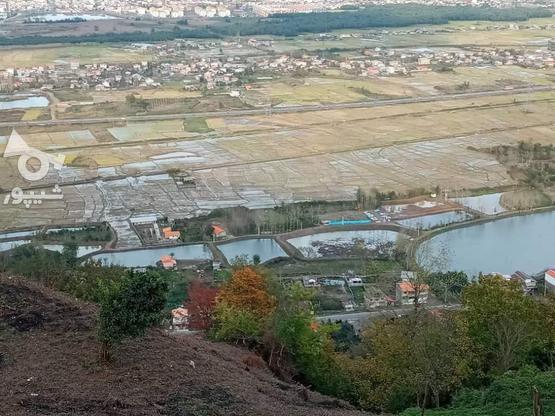 زمین مسکونی،باغی 3500 متری در آبچالکی در گروه خرید و فروش املاک در گیلان در شیپور-عکس7