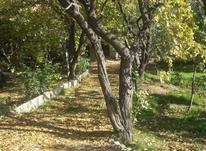 4500 متر باغ سندار. در شیپور-عکس کوچک