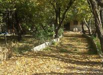 500 متر باغ سند تک برگ کردزار  در شیپور-عکس کوچک