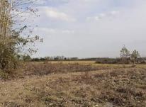 فروش زمین کشاورزی 1400 متر در صومعه سرا در شیپور-عکس کوچک