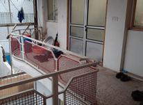 رهن آپارتمان ۱۰۰متر. ی مستاجر در حال تخلیه در شیپور-عکس کوچک