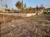 فروش زمین باغی 275 متر در خشکبیجار(شهرستان ) در شیپور-عکس کوچک