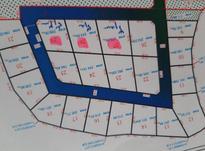 چالوس پالوجده/غفاری فروش زمین 208 متر در شیپور-عکس کوچک