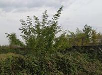 300 متر زمین مسکونی  در شیپور-عکس کوچک