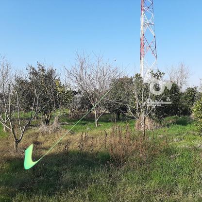 خانه باغی 1300 کیلومتر2 ساری پل کابلی نقارچی محله در گروه خرید و فروش املاک در مازندران در شیپور-عکس3