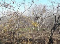 1 هکتار باغ سندار موقعیت عالی  در شیپور-عکس کوچک
