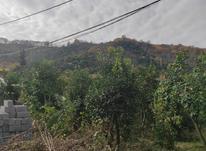 فروش زمین باغات 499 متر در سیاورز تنکابن در شیپور-عکس کوچک