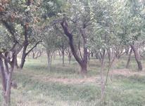 400 متر باغ قدیمی  لوکیشن عالی  در شیپور-عکس کوچک