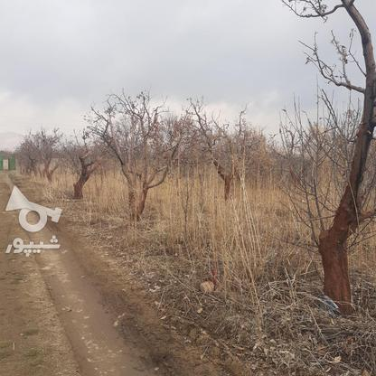 فروش زمین کشاورزی 200 متر در دماوند جابان در گروه خرید و فروش املاک در تهران در شیپور-عکس5