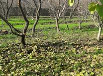 500 متر باغ دو کله سندار  در شیپور-عکس کوچک