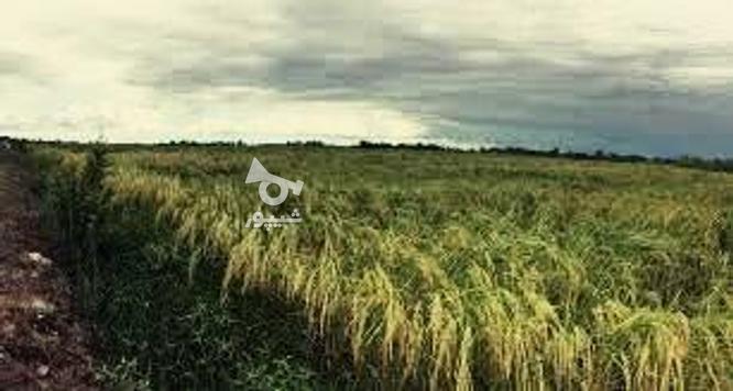 فروش زمین کشاورزی 550000 متر در سیاهکل در گروه خرید و فروش املاک در گیلان در شیپور-عکس1