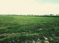 فروش زمین مسکونی 300000 متر در بندرانزلی در شیپور-عکس کوچک