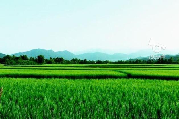 فروش زمین کشاورزی 320000 متر در لشت نشا در گروه خرید و فروش املاک در گیلان در شیپور-عکس1
