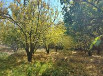 باغچه 250 متر در شهریار در شیپور-عکس کوچک