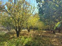باغچه 250 متر در شهریار در شیپور