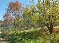 زمین کشاورزی 400 متر در شهریار در شیپور-عکس کوچک