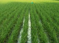 فروش زمین کشاورزی 600000 متر در سیاهکل در شیپور-عکس کوچک