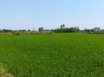فروش زمین کشاورزی 4200 متر در تنکابن در شیپور-عکس کوچک