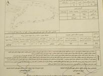فروش زمین مسکونی 357 متر در آستانه اشرفیه در شیپور-عکس کوچک