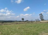 زمین مسکونی 1000 متری در آمل در شیپور-عکس کوچک