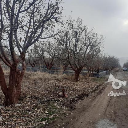 فروش زمین کشاورزی 200 متر در دماوند جابان در گروه خرید و فروش املاک در تهران در شیپور-عکس1