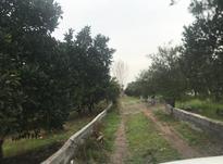 فروش زمین کشاورزی 509 متر در قائم شهر خطیرکلا در شیپور-عکس کوچک
