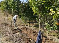 فروش زمین کشاورزی 1250 متر  در شیپور-عکس کوچک