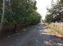 باغچه ۳۵۰ متری در شهریار در شیپور-عکس کوچک
