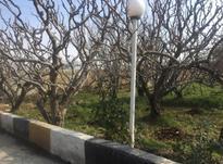 فروش  باغ1000 متر در شهریار در شیپور-عکس کوچک