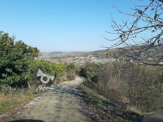 فروش زمین کشاورزی 4000 متری خارکش انتهای  بوستان 7  در گروه خرید و فروش املاک در مازندران در شیپور-عکس9
