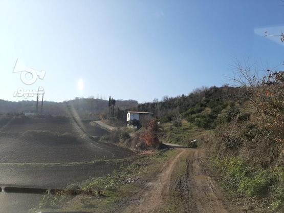 فروش زمین کشاورزی 4000 متری خارکش انتهای  بوستان 7  در گروه خرید و فروش املاک در مازندران در شیپور-عکس4