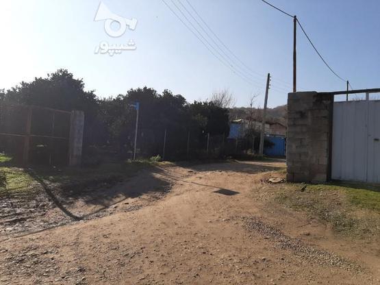 فروش زمین کشاورزی 4000 متری خارکش انتهای  بوستان 7  در گروه خرید و فروش املاک در مازندران در شیپور-عکس3