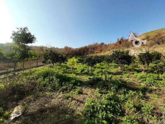 فروش زمین کشاورزی 4000 متری خارکش انتهای  بوستان 7  در گروه خرید و فروش املاک در مازندران در شیپور-عکس7