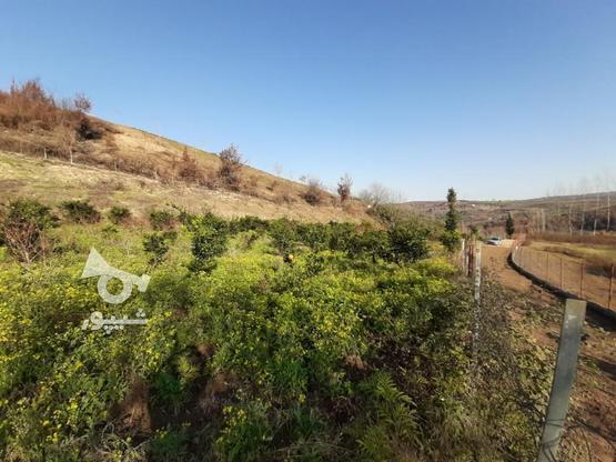 فروش زمین کشاورزی 4000 متری خارکش انتهای  بوستان 7  در گروه خرید و فروش املاک در مازندران در شیپور-عکس5