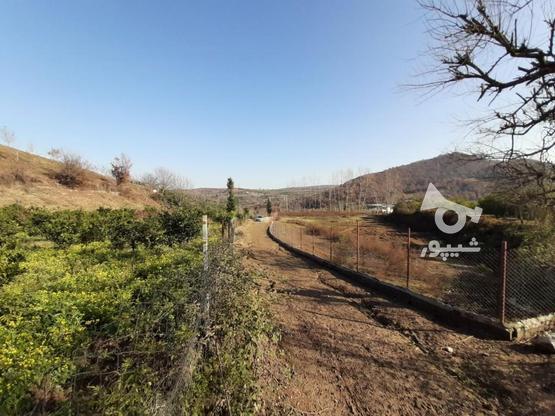 فروش زمین کشاورزی 4000 متری خارکش انتهای  بوستان 7  در گروه خرید و فروش املاک در مازندران در شیپور-عکس6