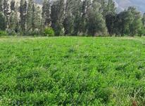 فروش زمین کشاورزی 1762 متر در فیروزکوه در شیپور-عکس کوچک