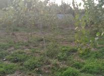 زمین مسکونی 200 متری مزرک در شیپور-عکس کوچک