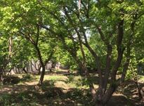 باغ 6000 متر در آمل در شیپور-عکس کوچک
